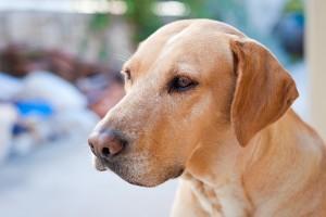 bigstock-Portrait-Of-Family-Dog-Sitting-51026734
